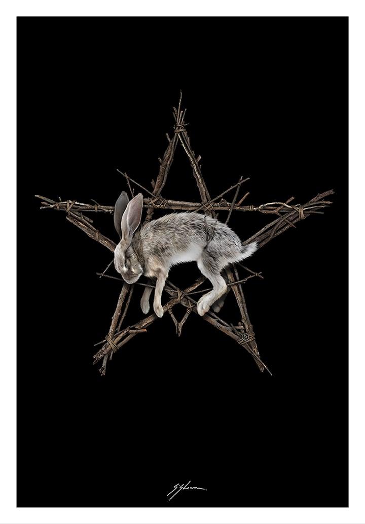 The Wicker Bunny