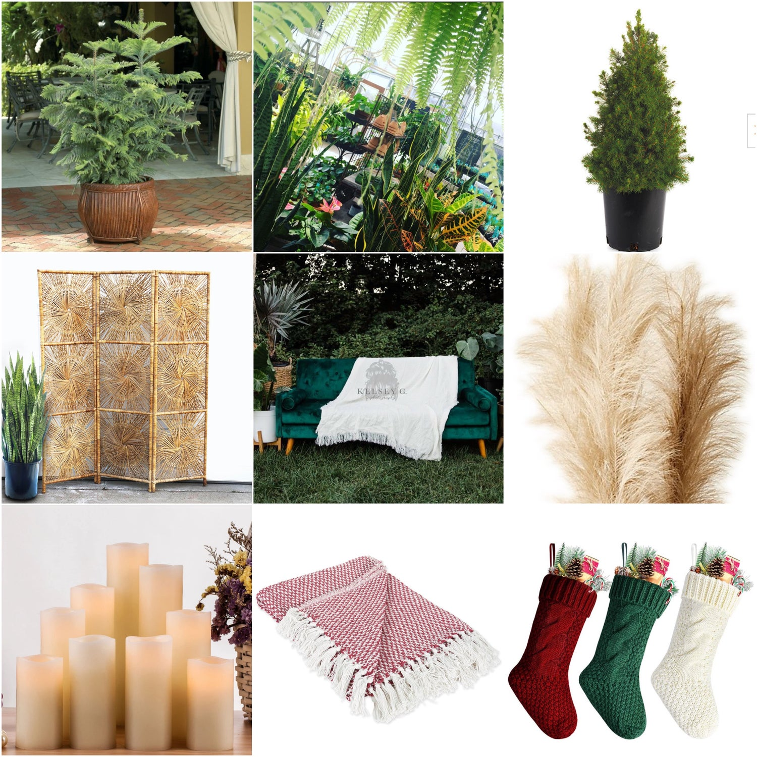 Image of Christmas in the Greenhouse 11/8