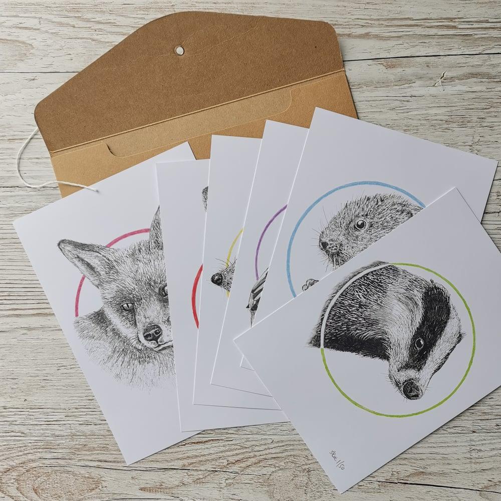 Image of British Wildlife - Set of Six Signed Prints