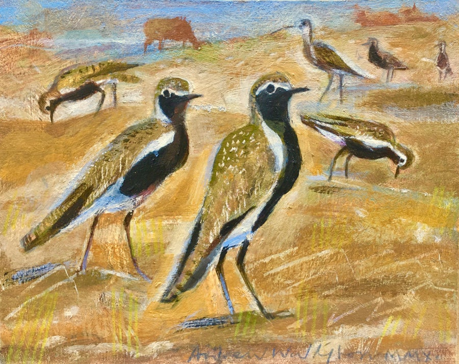 Image of Golden Plovers and Cattle, North Uist.