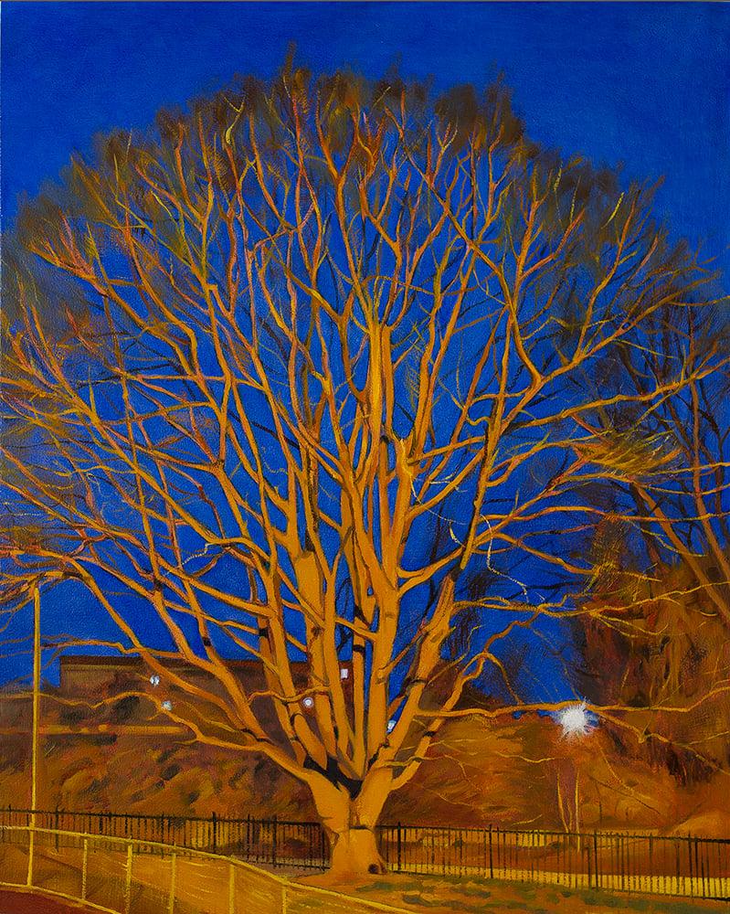 Image of Roxborough Oak, 2020
