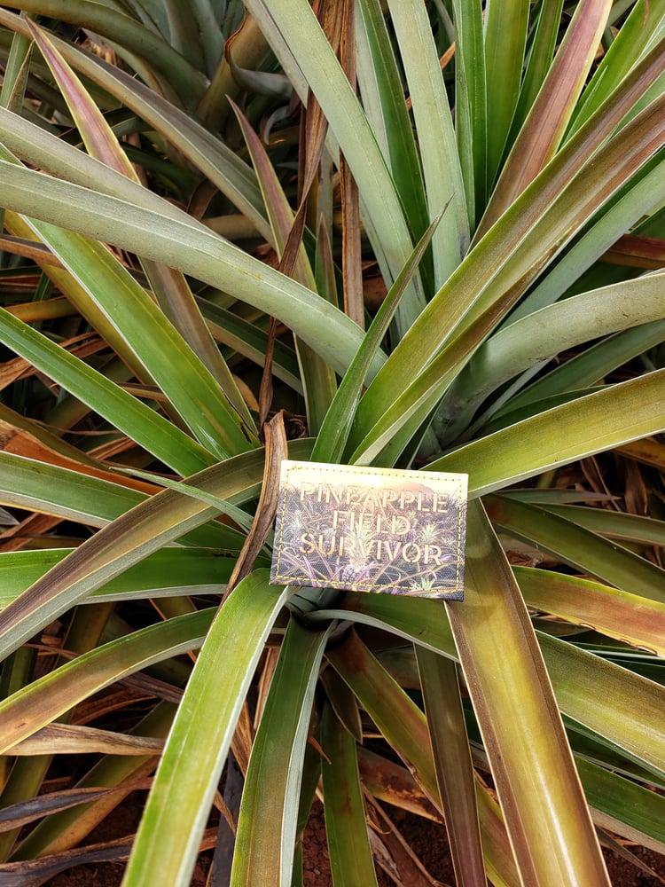 Image of Pineapple Field Survivor patch