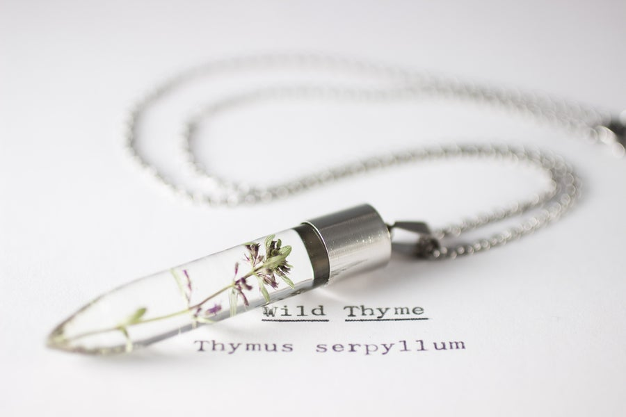 Image of Wild Thyme (Thymus serpyllum) - Medium #2