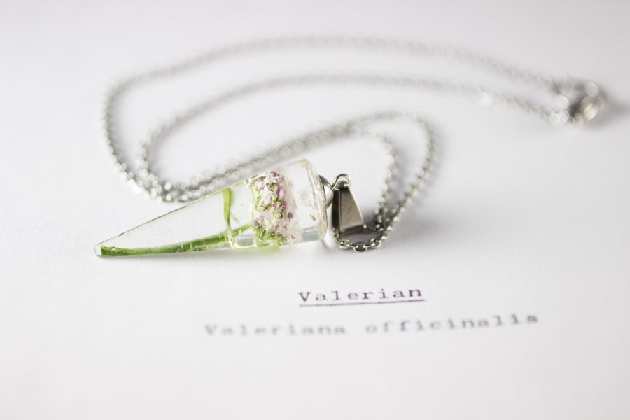 Image of Valerian (Valeriana officinalis) - Conical Pendant #3