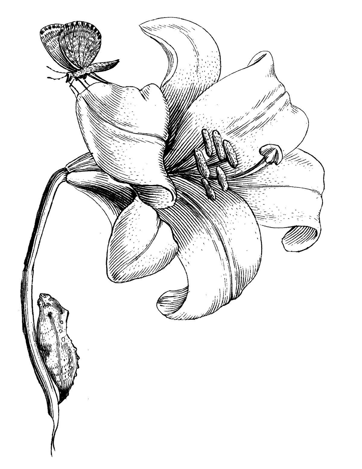 Image of CUSTOM PORTRAIT FOR CMAC