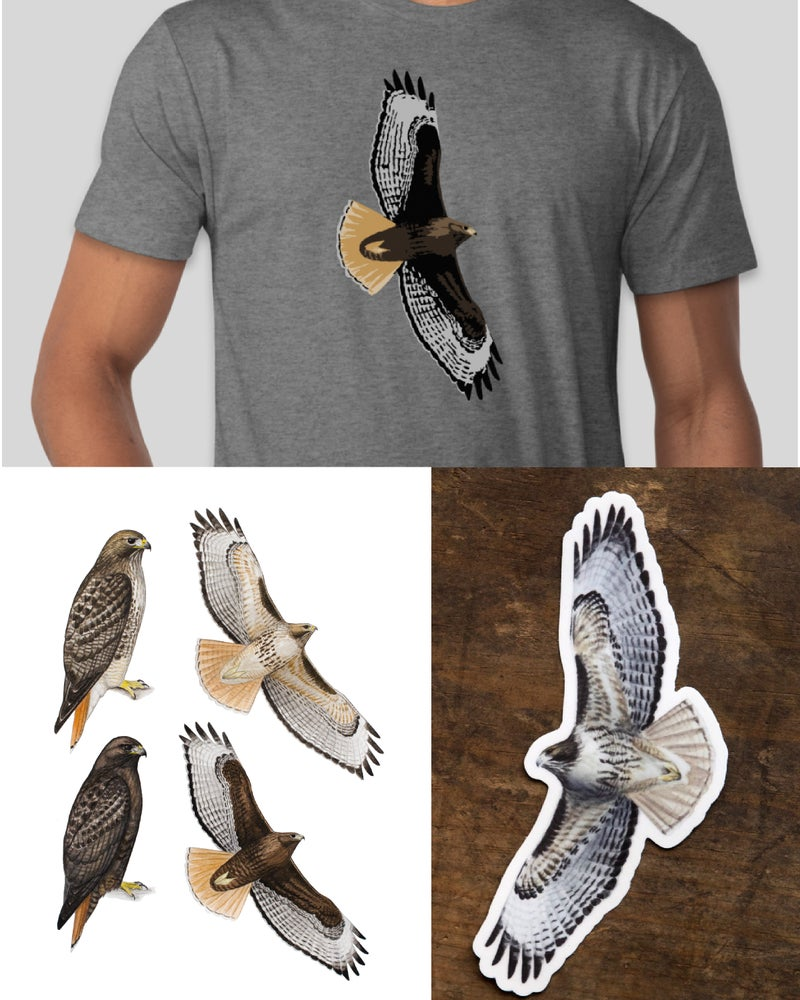 Image of Red-tailed Hawk Project Support Combo
