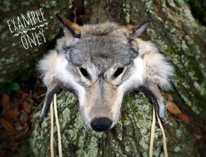 Image of Wolf Face Headdress Commission