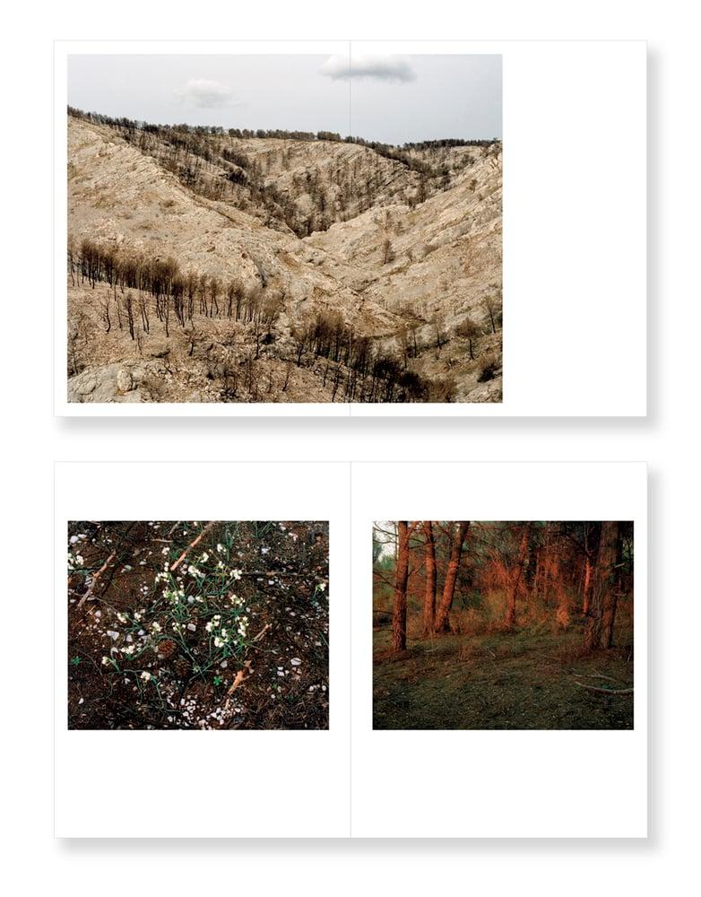 Image of Wildfire - Arnaud Teicher