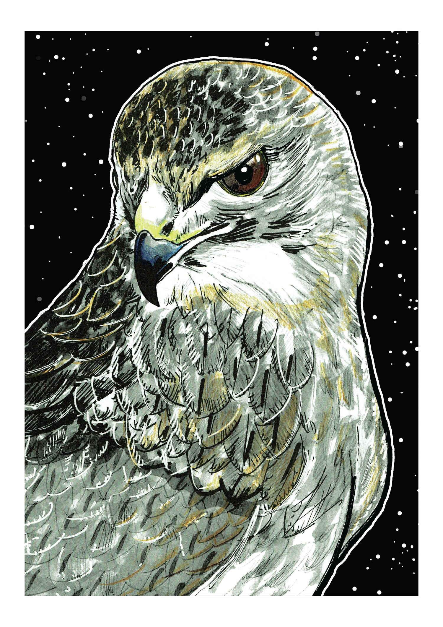 """Image of Kestrel At Night Art Print Signed A3 Size (16"""" x 12"""")"""