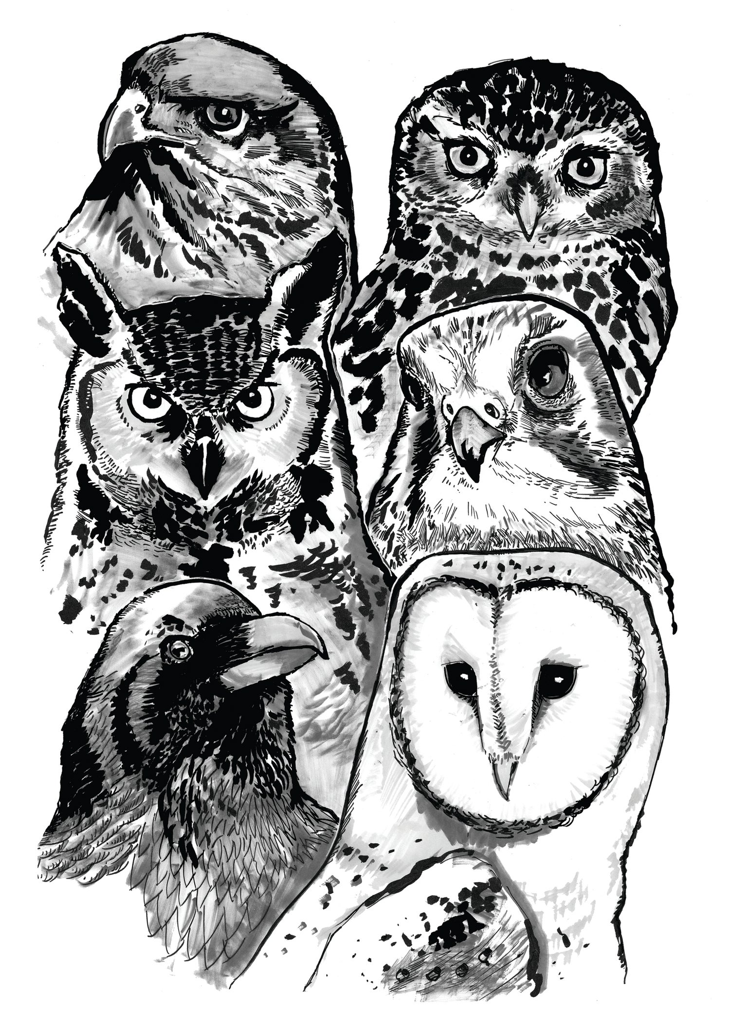 """Image of Birds Of Prey Art Print Signed A3 Size (16"""" x 12"""")"""