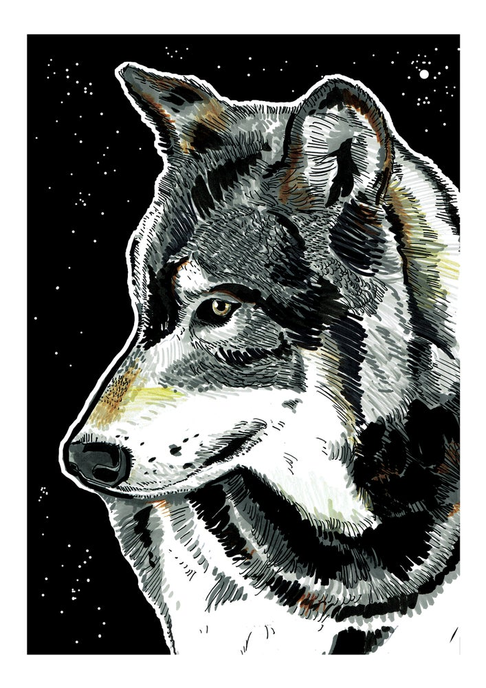 """Image of Wolf At Night Art Print Signed A3 Size (16"""" x 12"""")"""