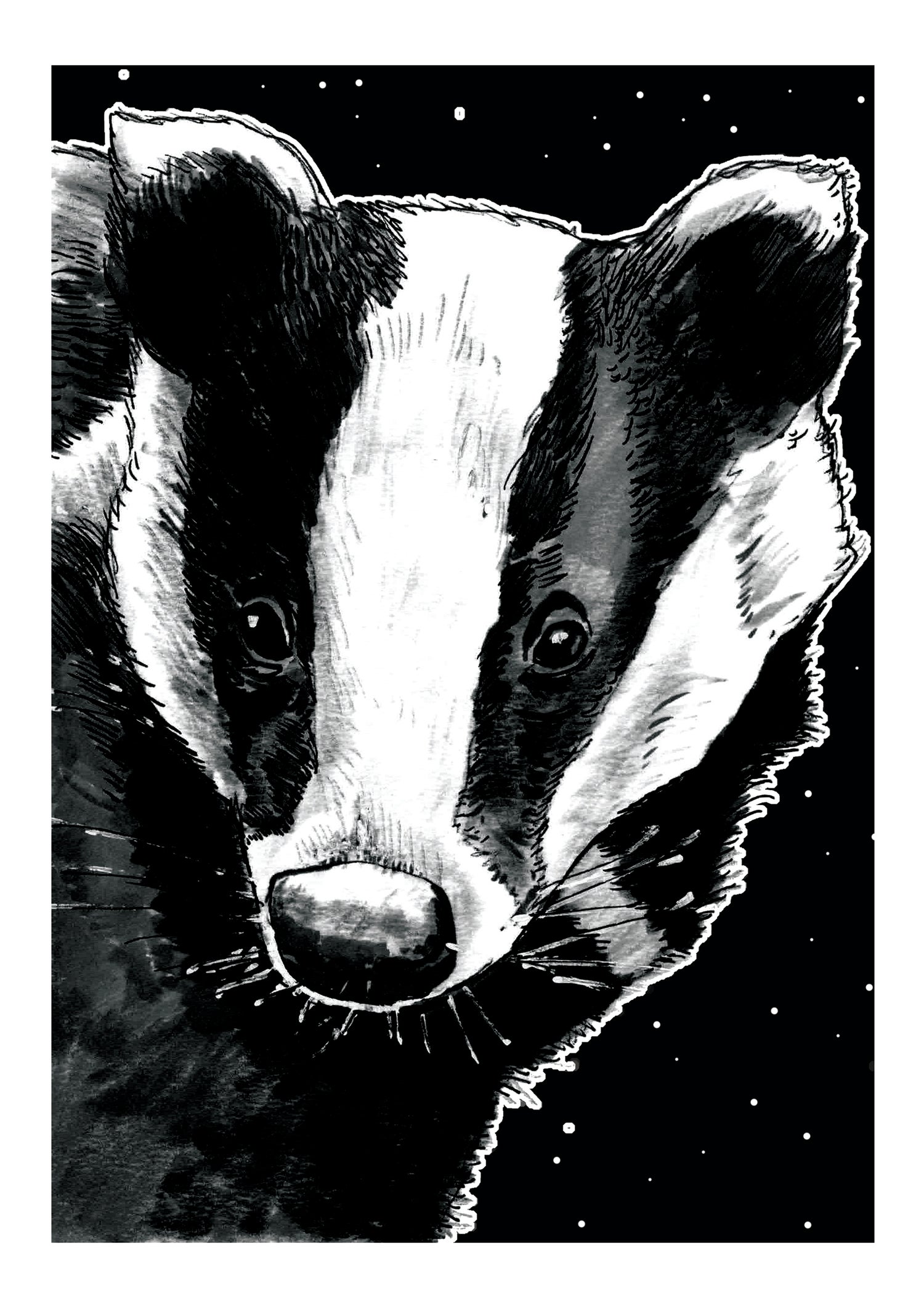 """Image of Badger At Night Art Print Signed A3 Size (16"""" x 12"""")"""
