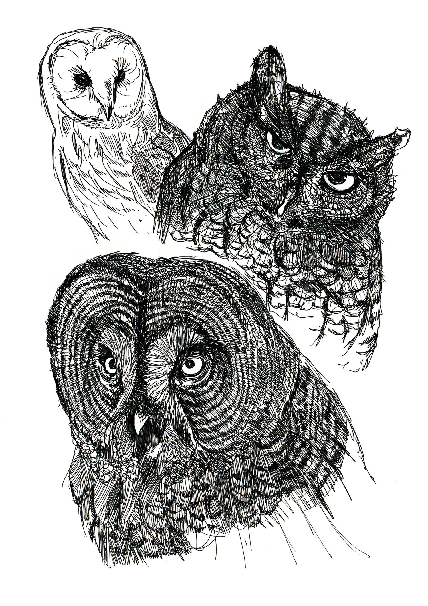 """Image of Trio Of Owls Art Print Signed A3 Size (16"""" x 12"""")"""