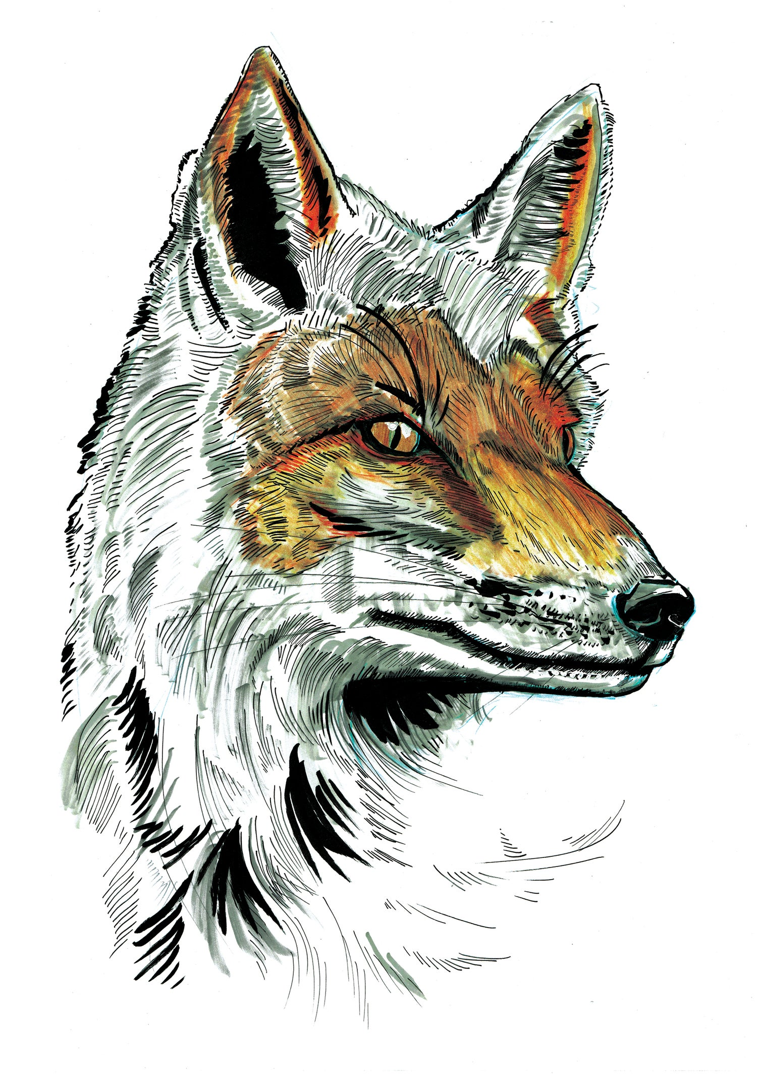 """Image of Snow Fox Art Print Signed A3 Size (16"""" x 12"""")"""