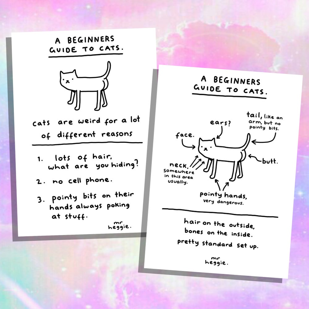 Image of The beginners guide to cats