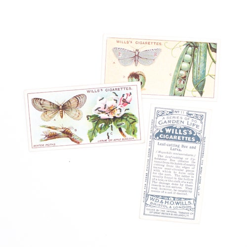 Image of Garden Life Cigarette Cards - Set of 8