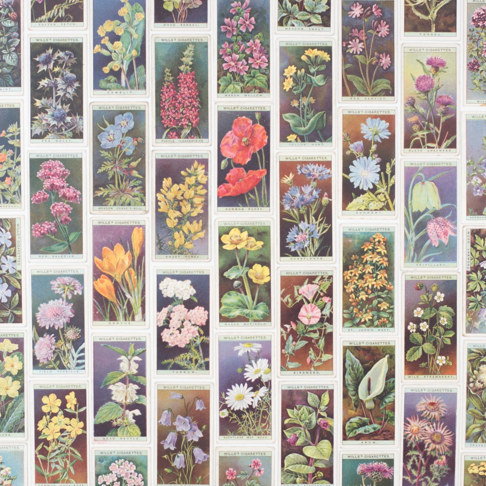 Image of Wild Flower Cigarette Cards - Set of 8