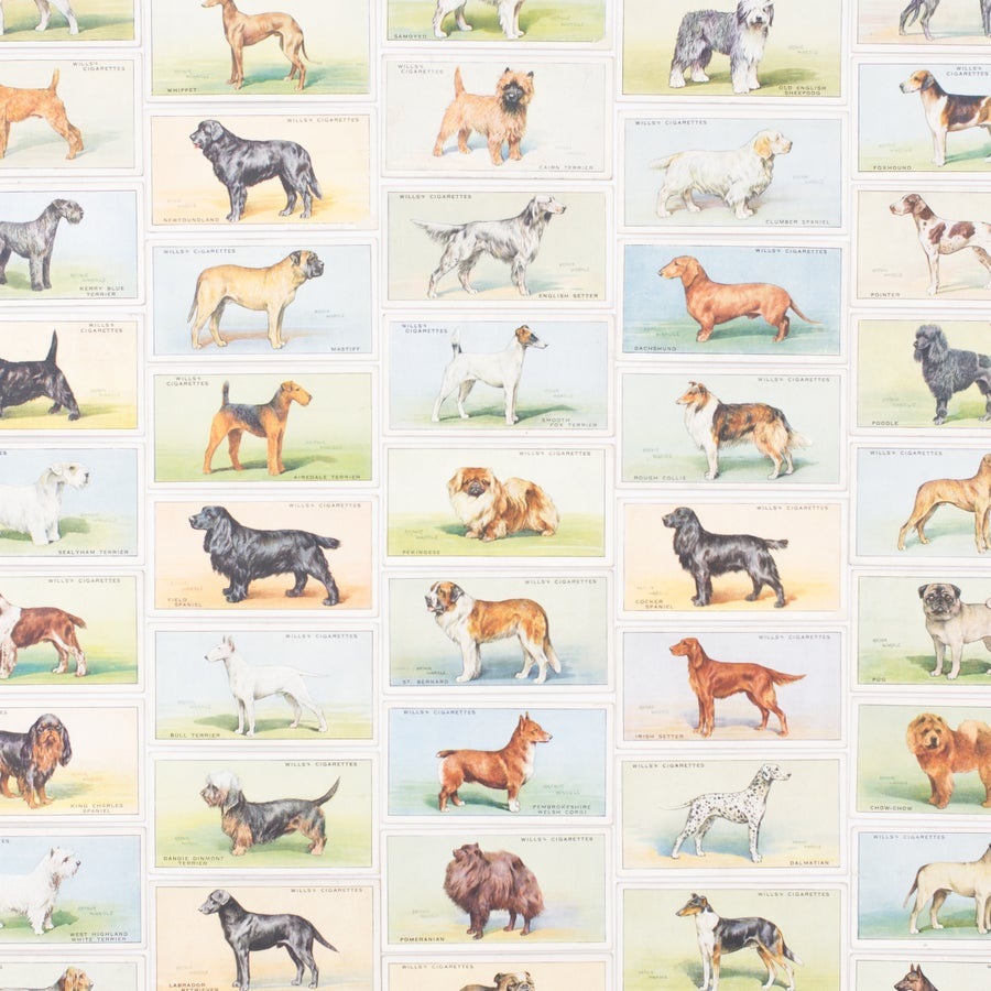 Image of Dog Cigarette Cards - Set of 8