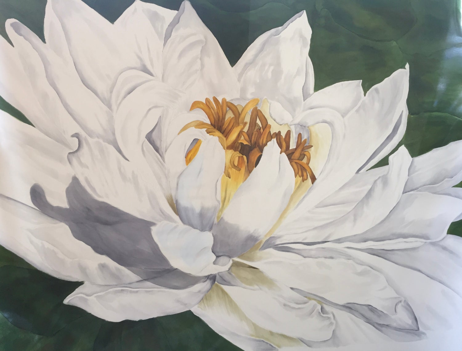 Image of White Water Lily