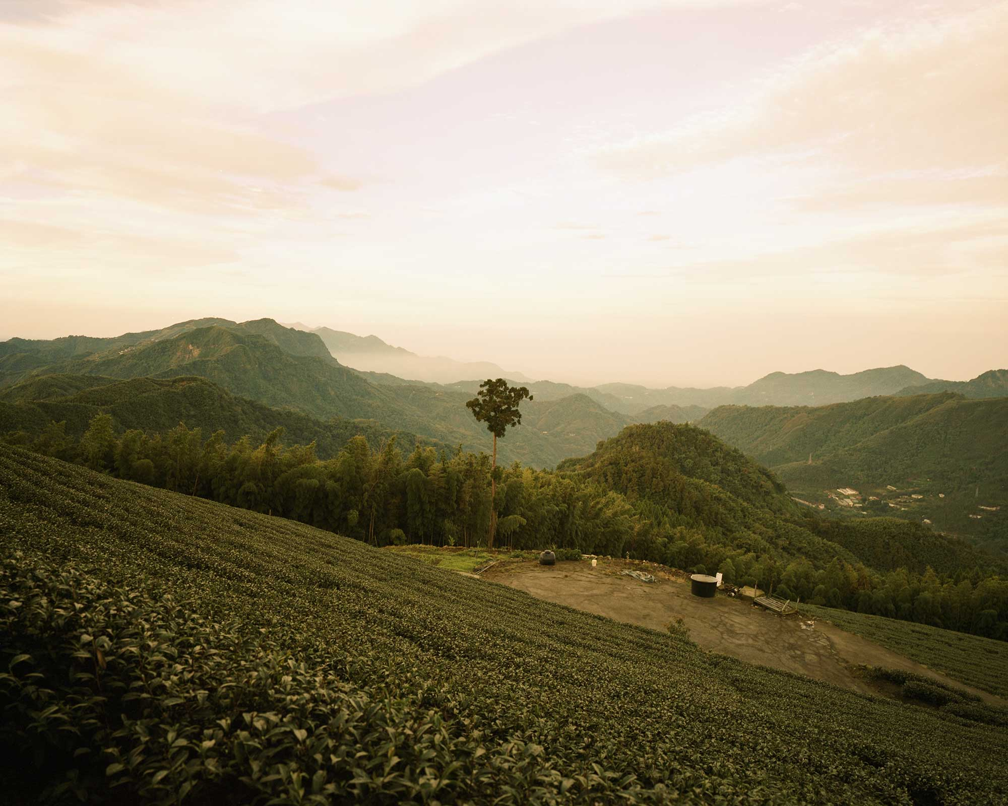 Image of Taiwan Tea Plantation