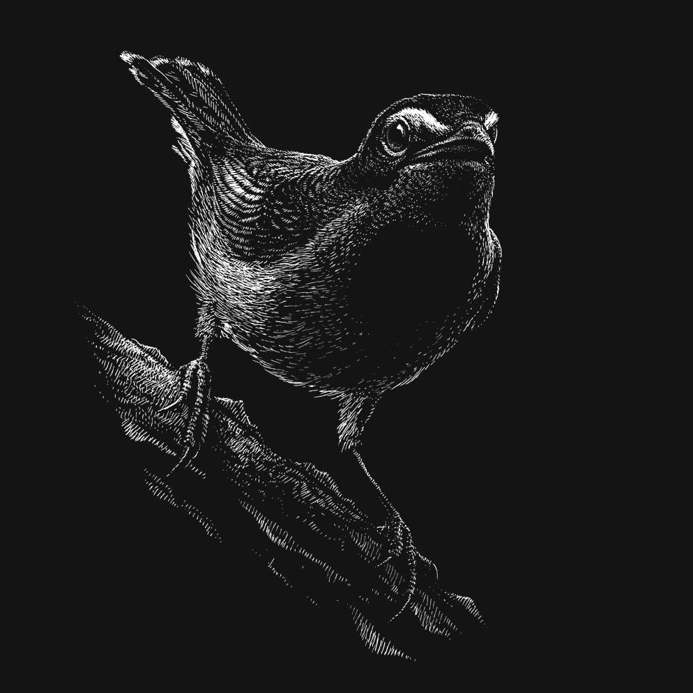 Image of »Bird #1«
