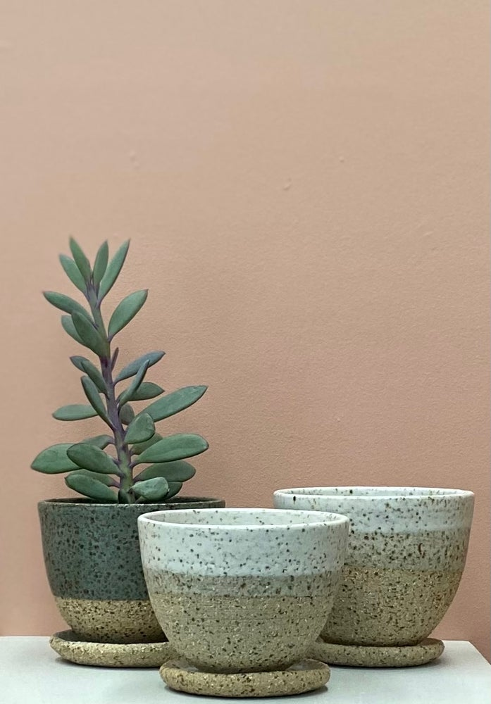 Image of Three small planters and trays