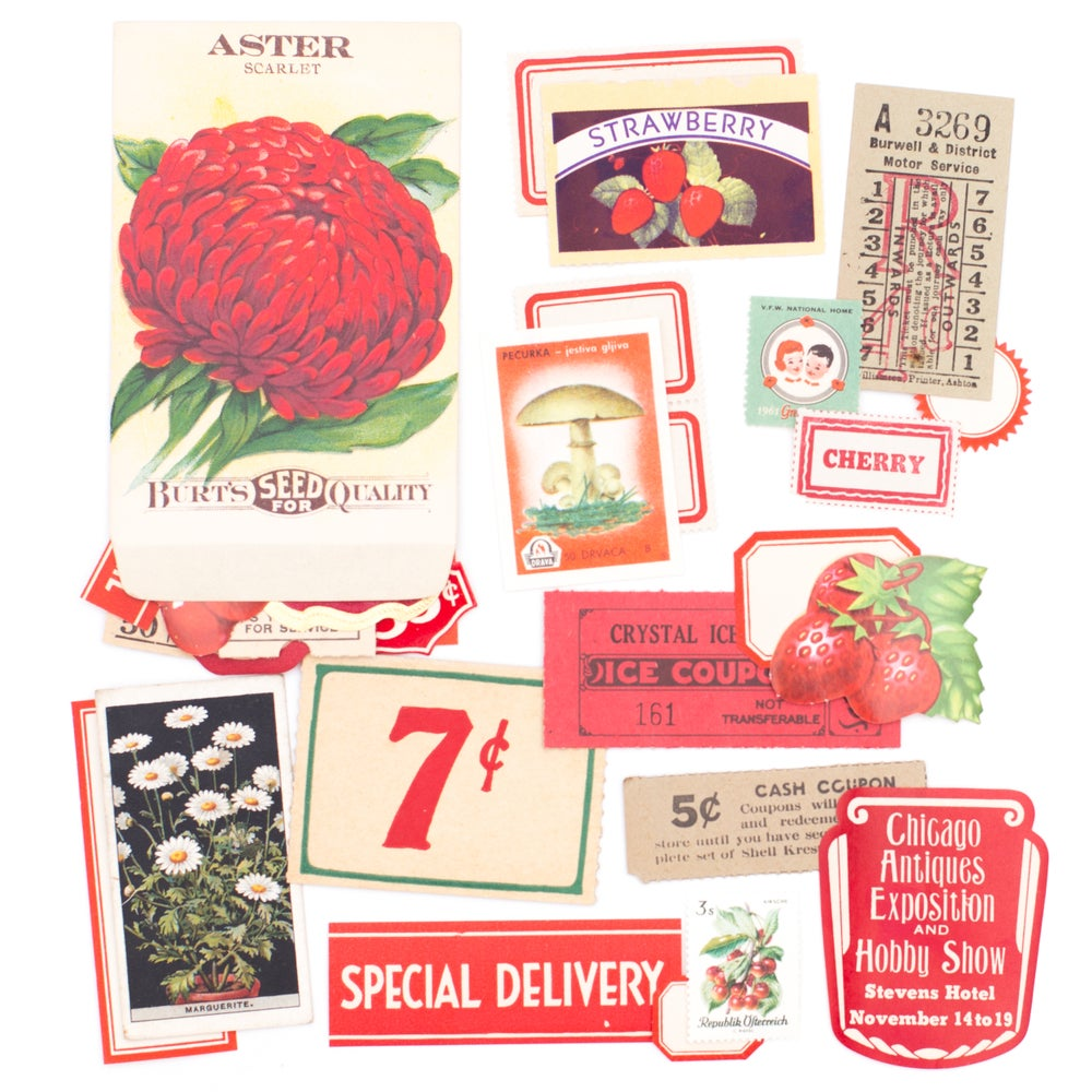 Image of Aster Seed Packet with Red & Green Ephemera