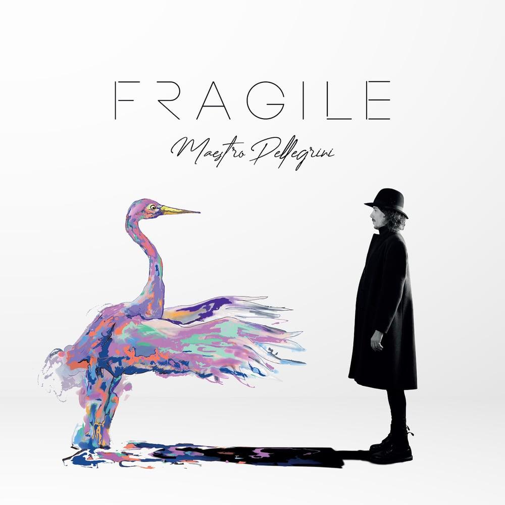 """Image of Maestro Pellegrini - """"Fragile"""""""