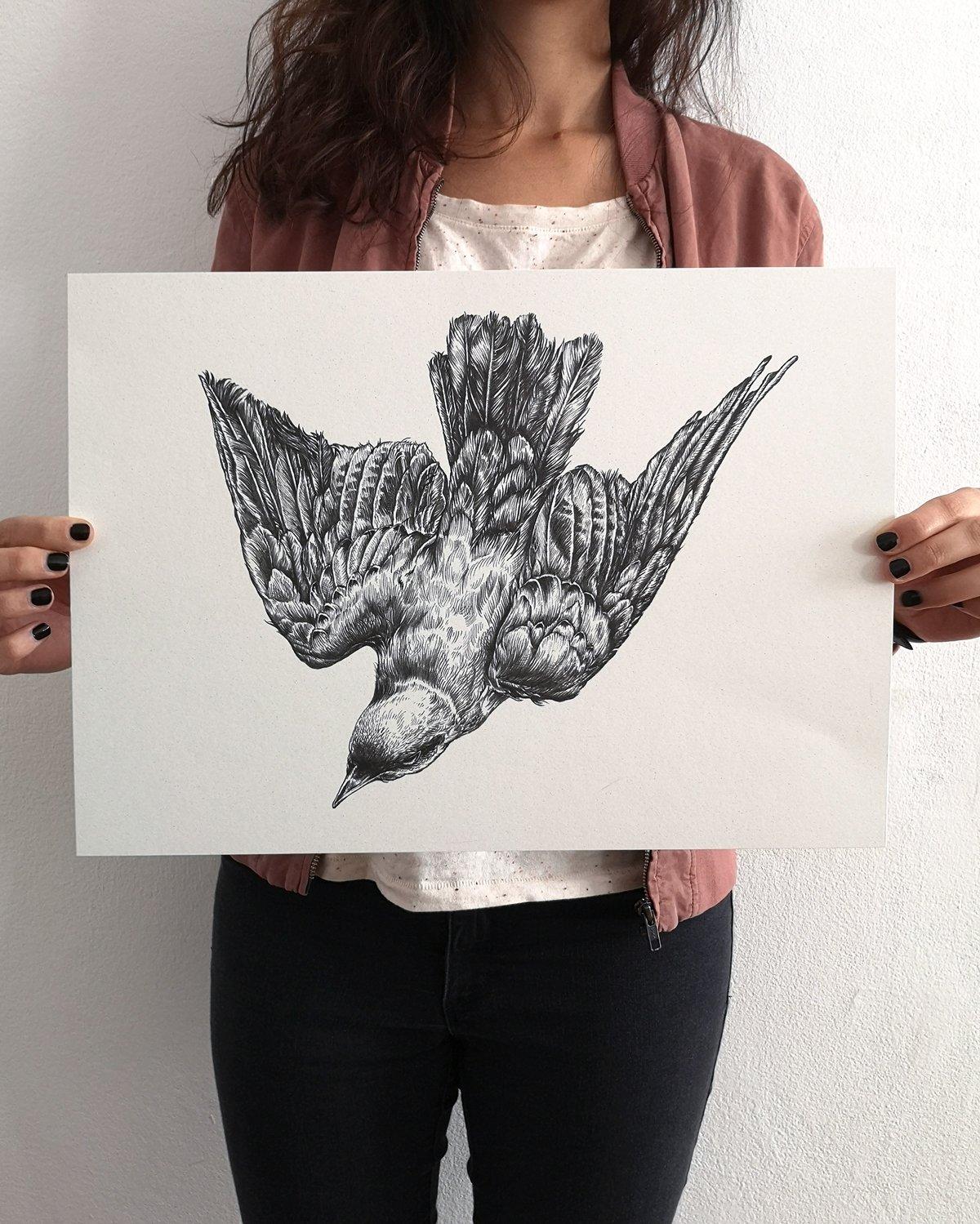 Splendid Starling