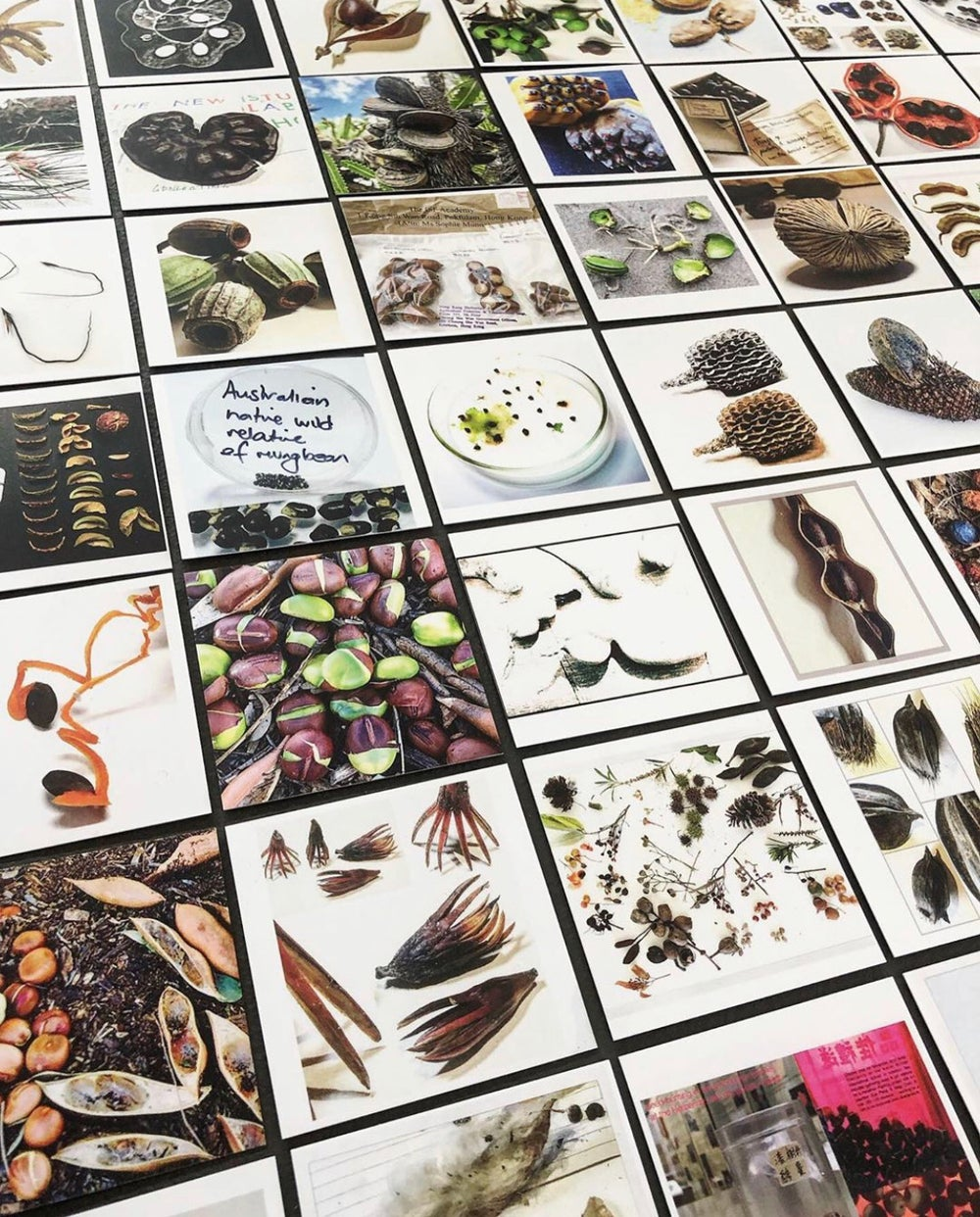 Image of 'Seed Language' - 50 Seed Diversity images : NOW SOLD OUT!