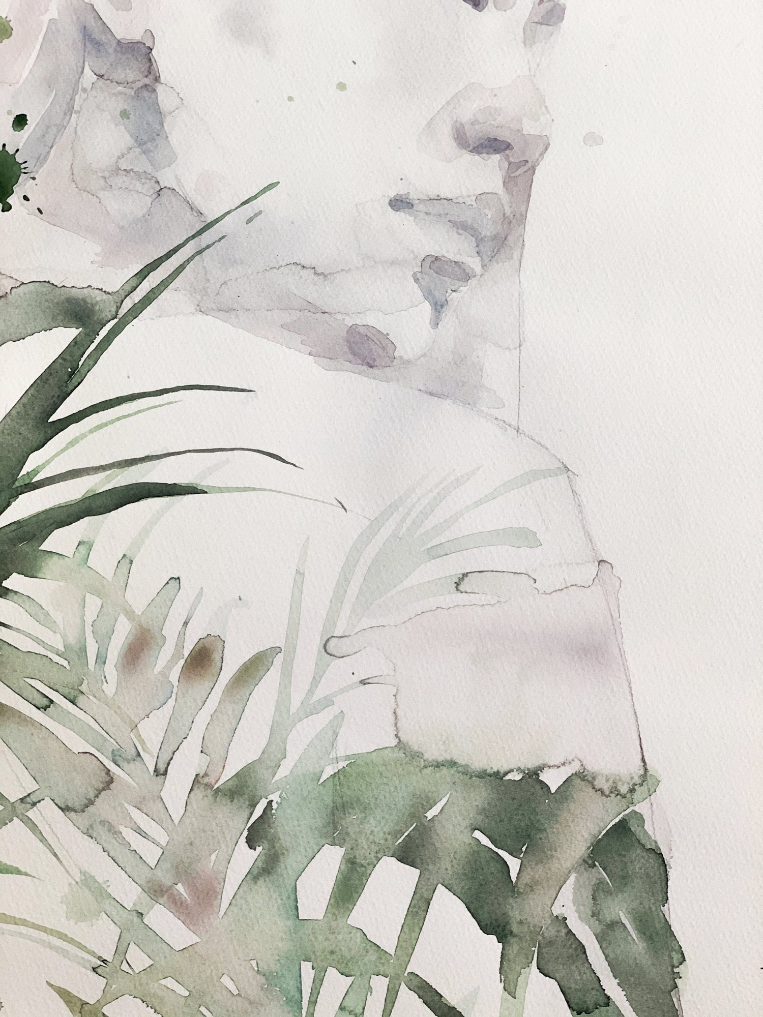Agnes-Cecile foliage