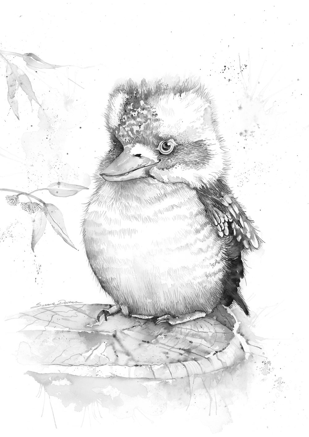 Image of King the baby kookaburra - FREE Shipping within Australia