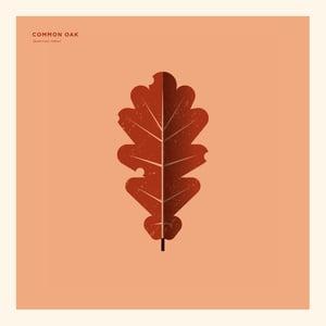 Image of Common Oak Artprint
