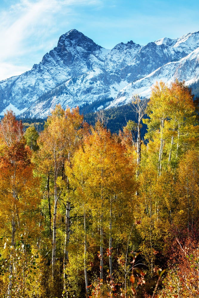 Image of Colorado Autumn
