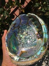 XL Abalone Shell + Smudge (optional) - WEST COAST