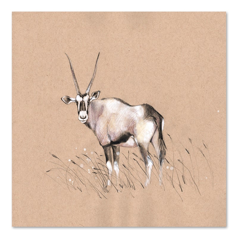 "Image of Original Drawing - ""Oryx"" - 20x20cm"