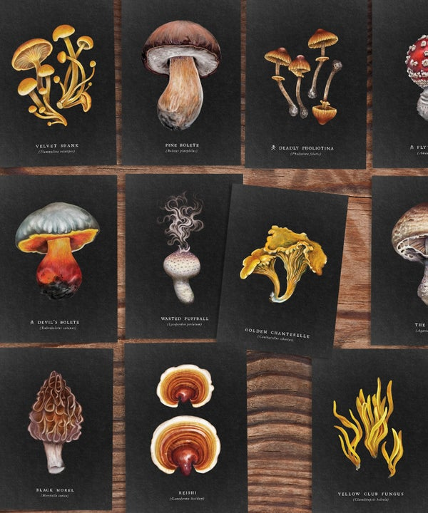 Image of The Night Fungi Print Collection