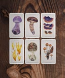 Image of The Fungi Collectible Cards | PACK 1