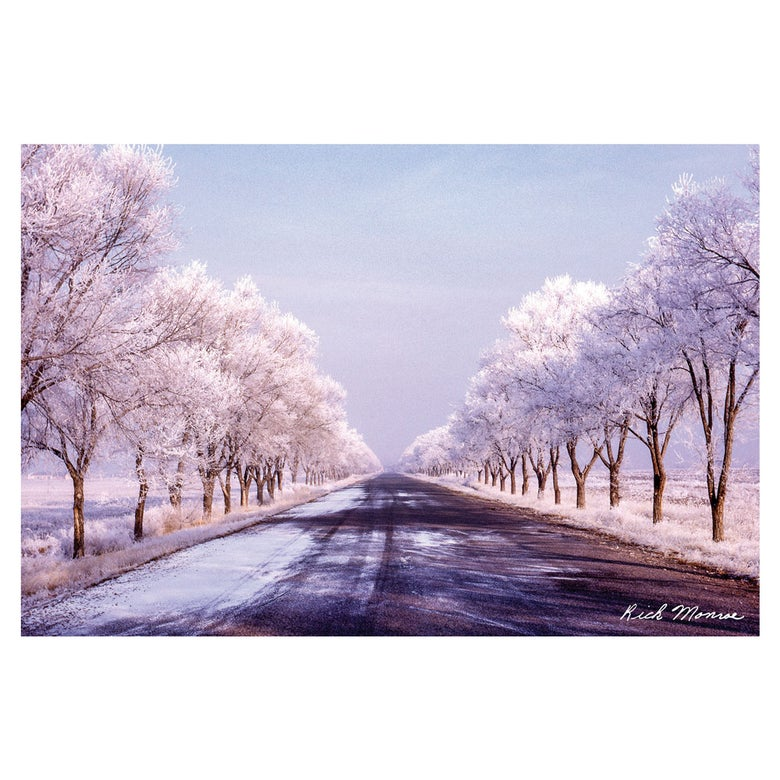 Image of Rick Monroe Fort Rd Tree Postcard 5 Pack