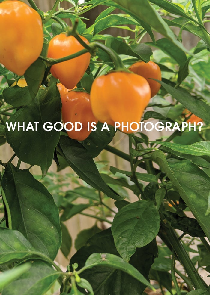 Image of What Good Is a Photograph?