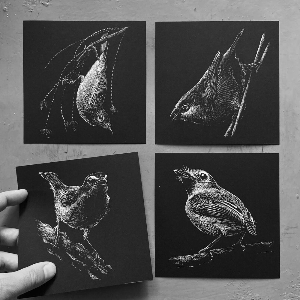 Image of »Tiny birds series«
