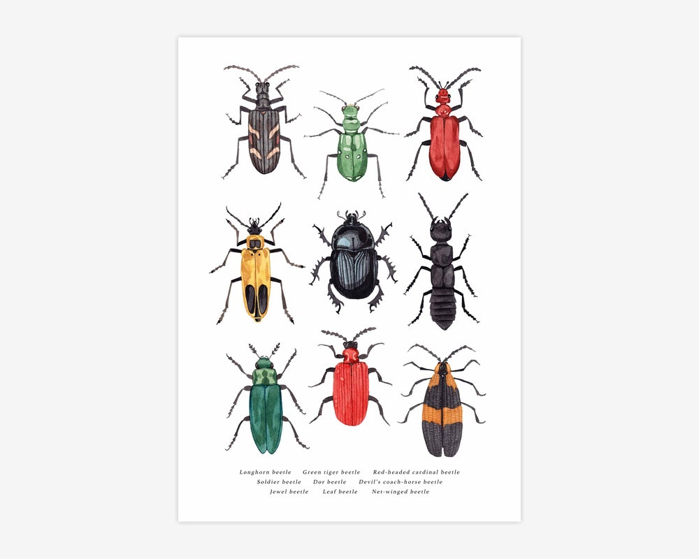 Image of Beetles Print