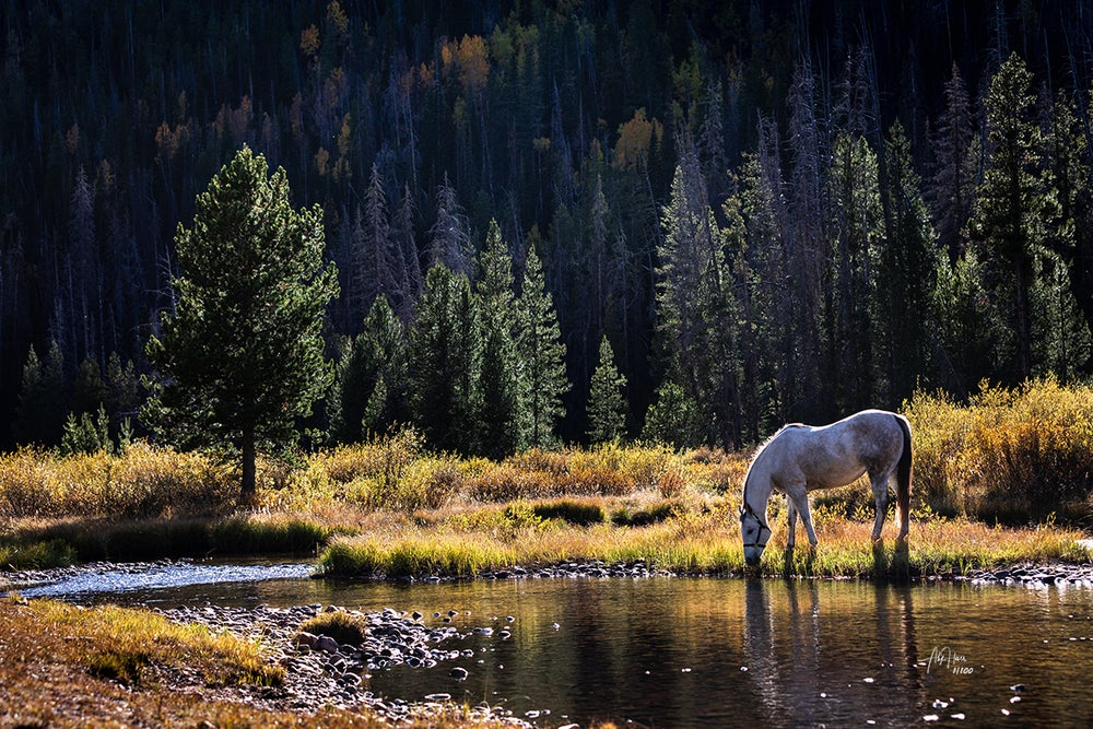 Image of Equine Bliss