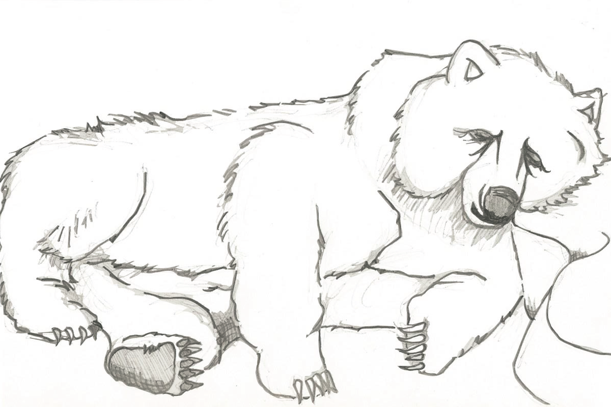 Image of Hibernation Bear Print