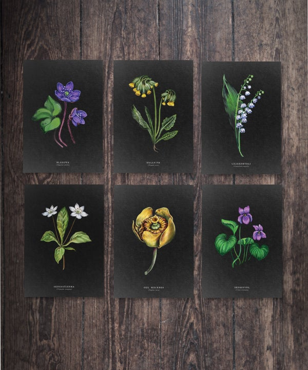 Image of Wildflower Postcard Set - Night