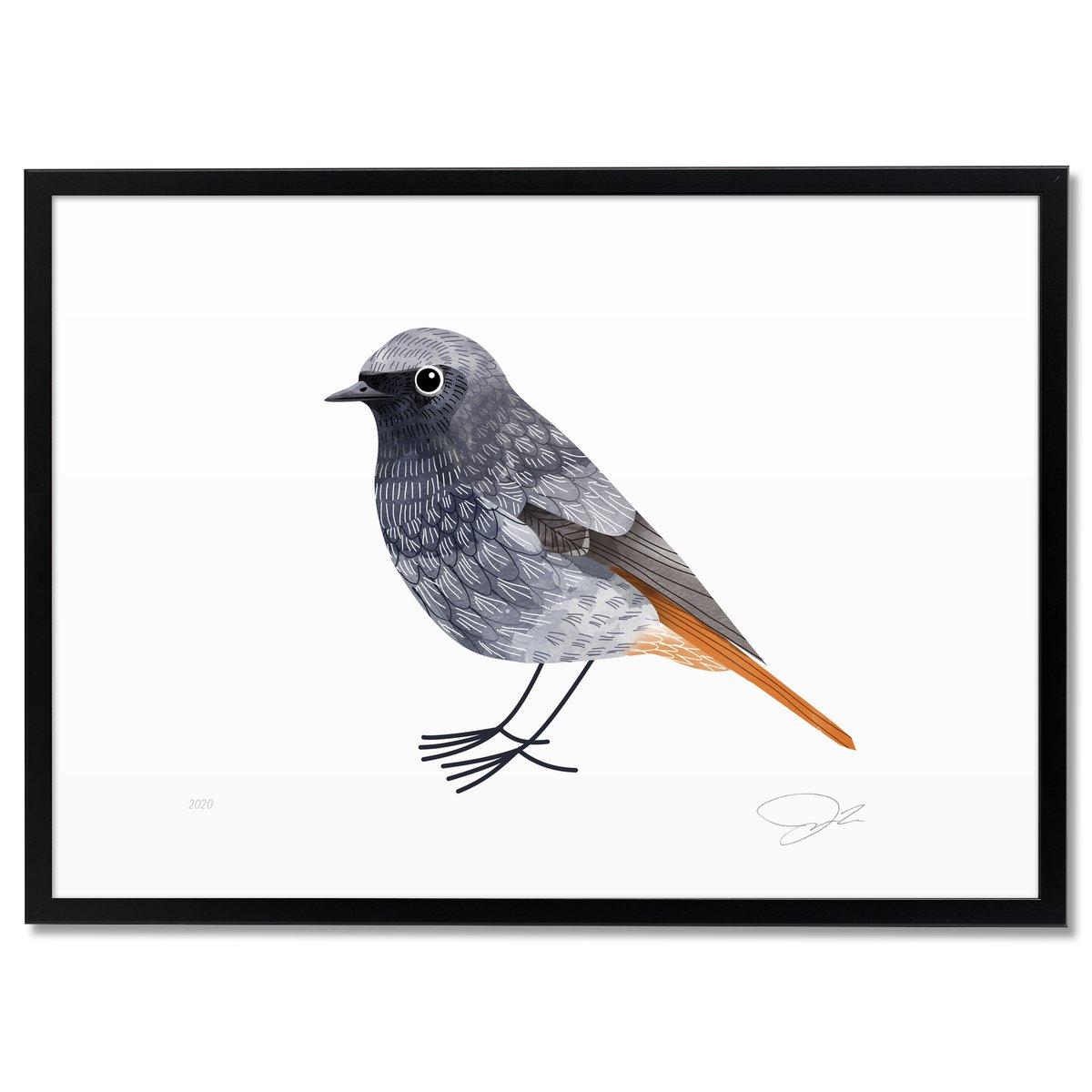 Image of Print: Redstart (Rotschwanz)