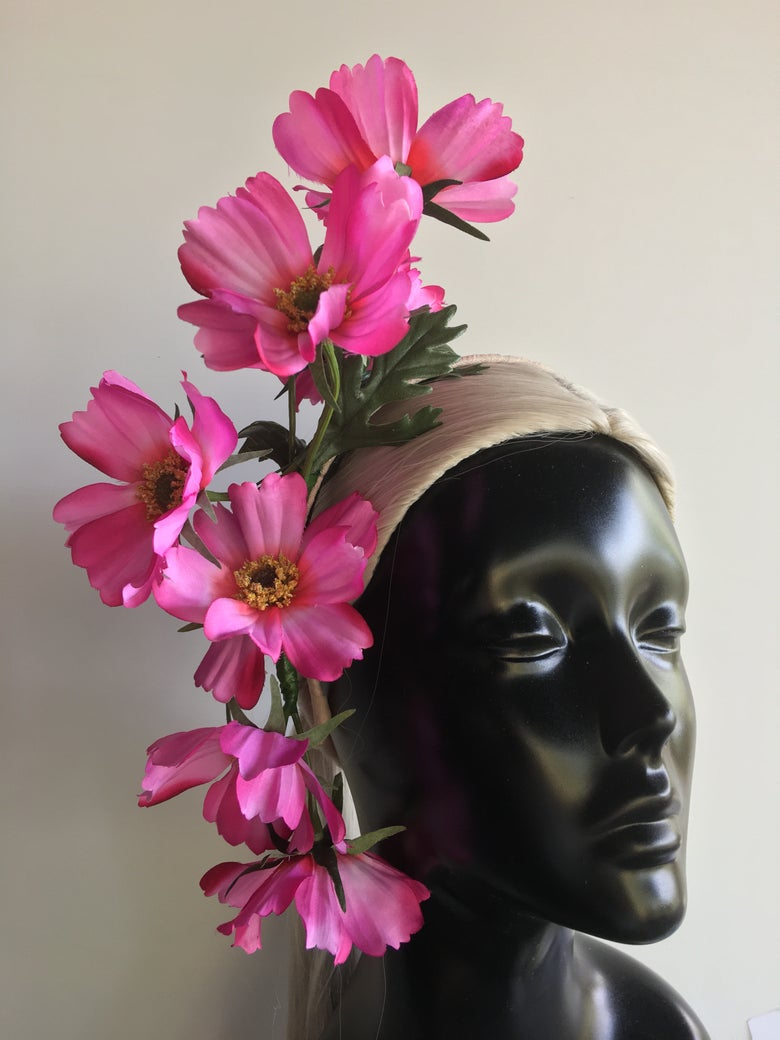 Image of Pink cosmos