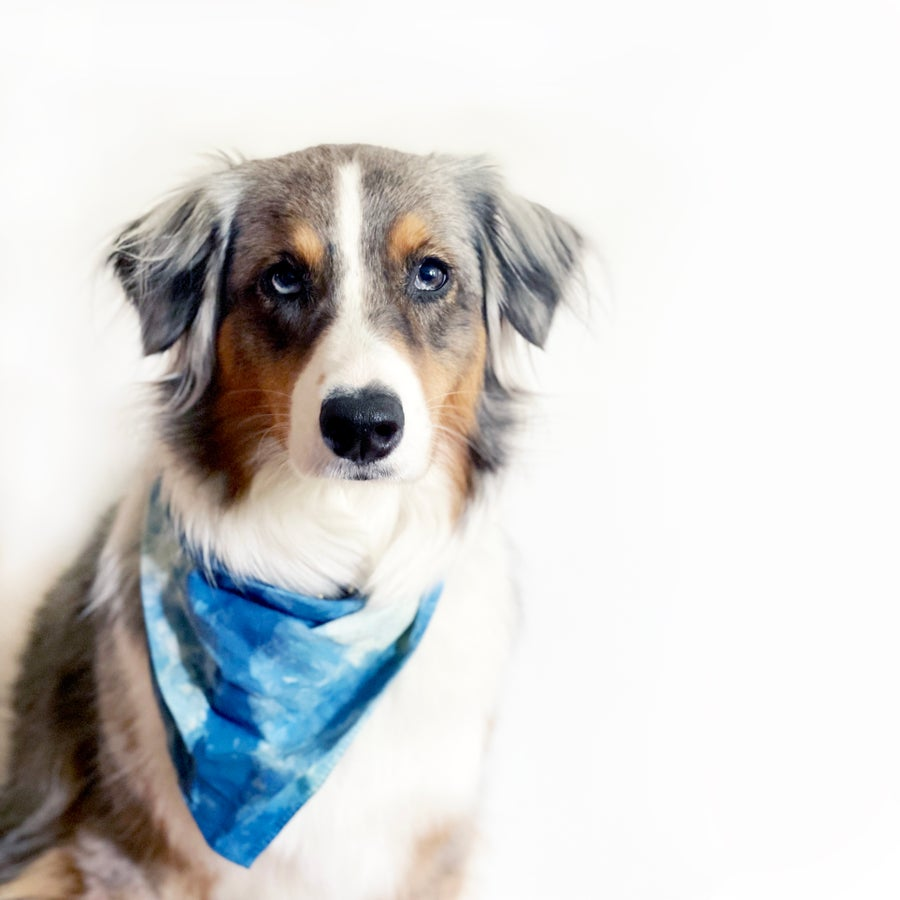 Image of Hand Dyed Indigo Dog Bandana
