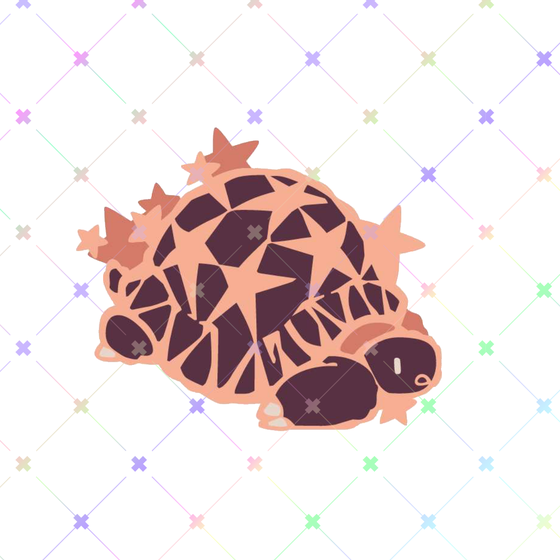 Image of [Preorder] Star Tortoise