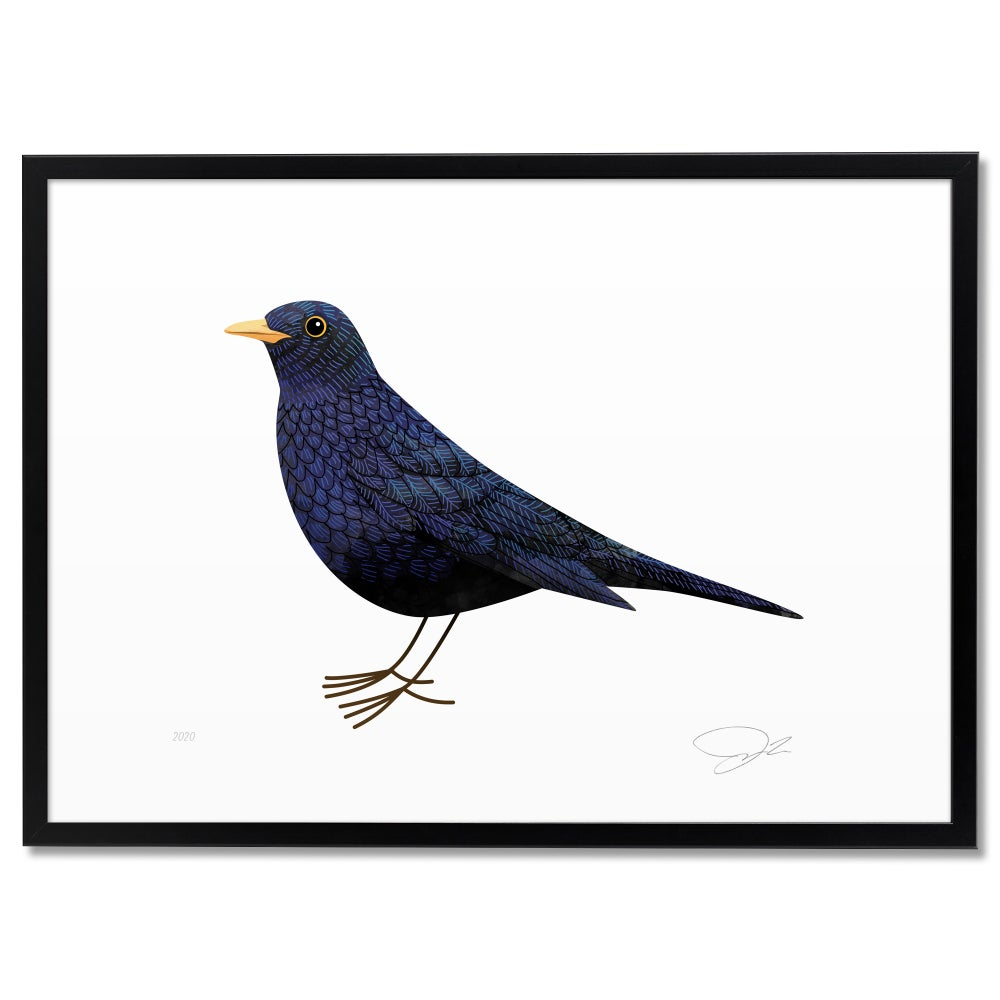 Image of Print: Blackbird (Amsel)